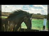 Встреча с лошадью – это как прослушивать песню в первый раз и понимать, что она станет твоей любимой.😇🎵💙