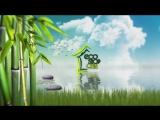 Eco Shop Chita