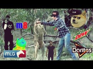 Man Punches Kangaroo [MLG Style]