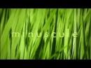 Minuscule - Season 1 20 minutes Compilation 1