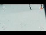 Фура с тиграми попал в аварию в Оренбурге