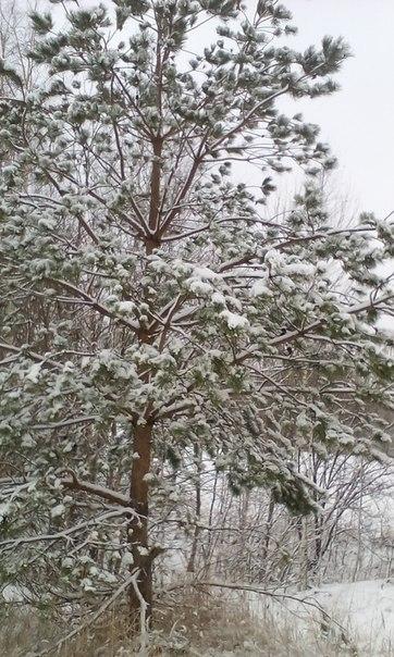 #зима