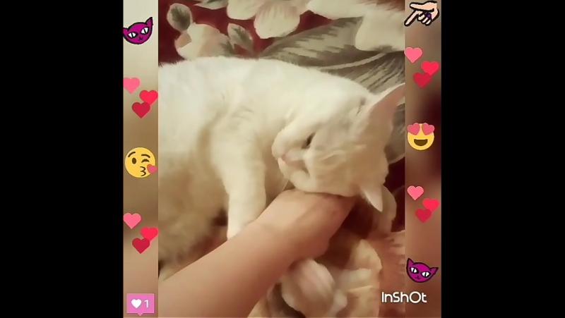 Мой кот Барсик Кот Котик Мяу Мур Мурлыка