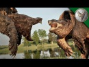 Грифовая черепаха vs Каймановая черепаха.Версус животных.Brave Wilderness на русском