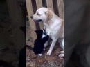 Lustige Katzen Teil 3 / Funny Cats Part 3