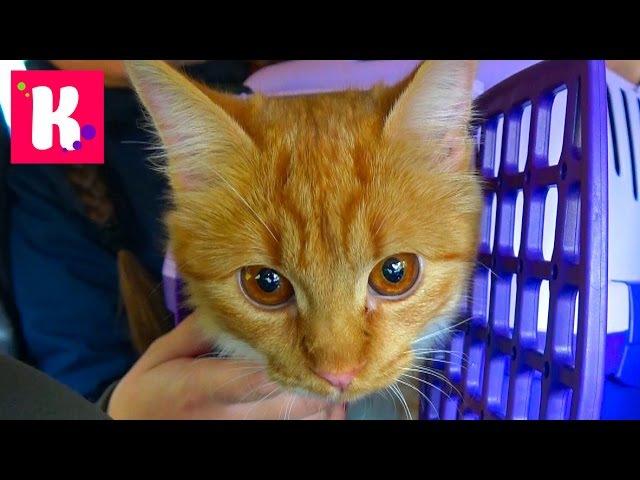 Кошечка Мурка и Катя едут в Котокафе на кошачью вечеринку Много кошек котята играют с детками