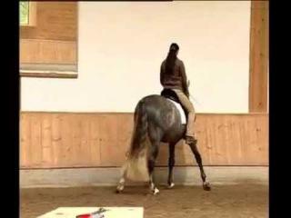 Elegant Dressage Training DVD 2 English by Anja Beran