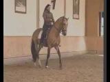 Elegant Dressage Training DVD 3 Englisch by Anja Beran