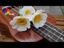 Cách làm hoa cúc họa mi bằng giấy nhún - How to make daisy paper [