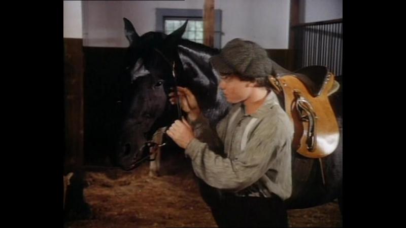 Сериал Черный красавец Black Beauty 1978 США