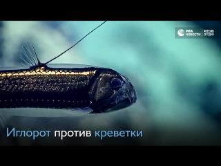 Бой в морской пучине