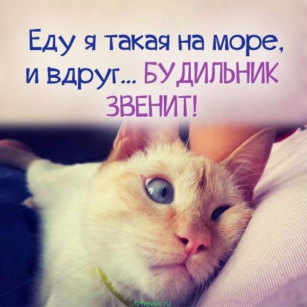 https://pp.vk.me/c604628/v604628345/34e/D8O2nuPO-7Q.jpg
