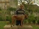 Венгерская жесткошерстная легавая. Охотничьи Собаки