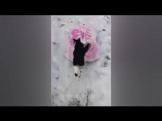 ПРИКОЛЫ 2016 Коты Приколы Смешные Животные Funny videos 2016