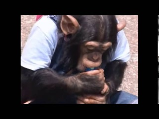 Pankun and James HD Super Monkey Lovely Dog Season 01, Ep 17