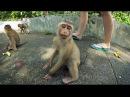 Monkey Hill, Phuket. Гора обезьян на Пхукете.