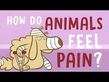 How do animals experience pain - Robyn J. Crook