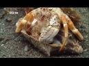 Nat Geo Wild: Самое странное место в океане. Документальный фильм National Geographic