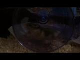 gotta hamster faster