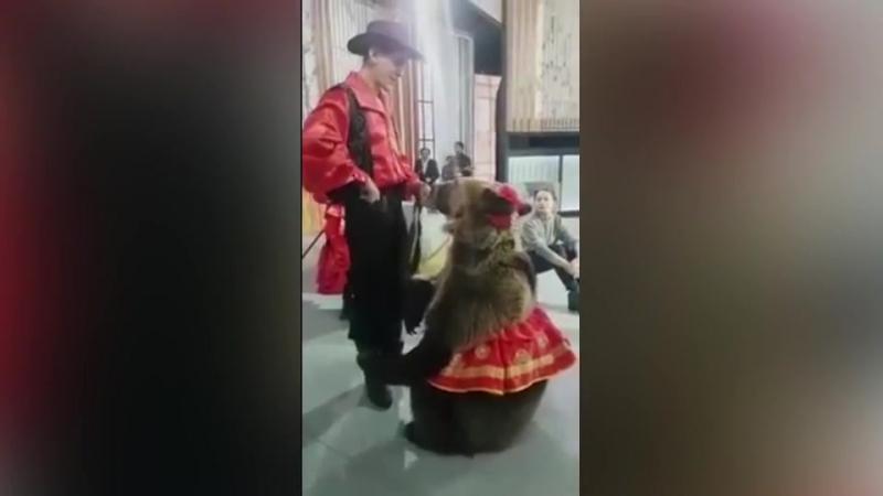 Медведь напал на женщину во время съемок передачи » Freewka.com - Смотреть онлайн в хорощем качестве