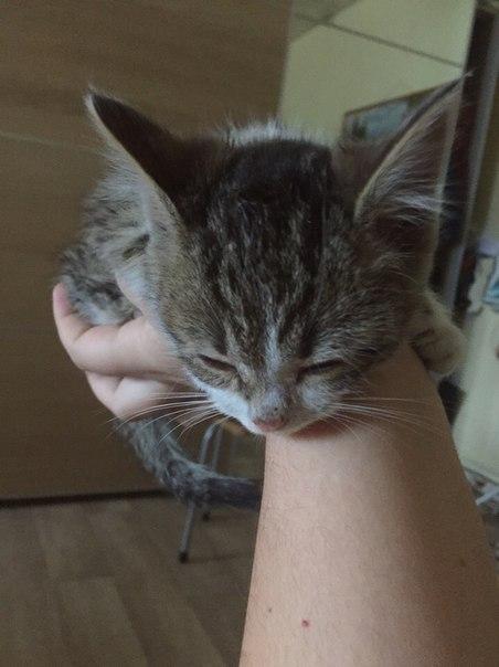 Отдам в хорошие и добрые руки! Спасла котёнка от собак, второго не усп