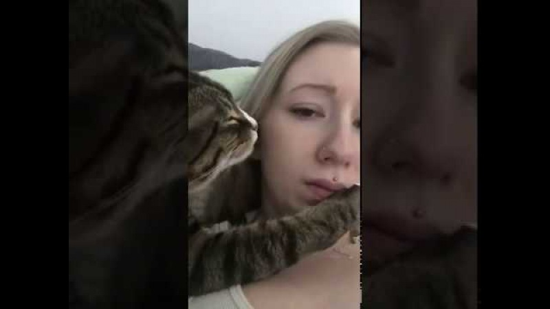 Кот любит хозяйку FunFailTop 2016
