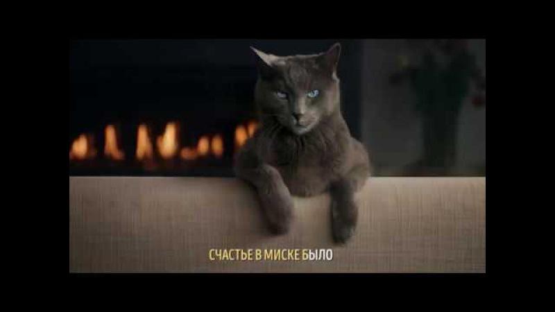 Реклама Sheba. Ты не устоишь перед котом или Чего хотят кошки