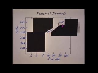 [МИТ MIT] 8.01x Лекция 1 Измерения пространства и времени