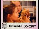 Котокафе X-CAT Коты мира Икс, ЛОТОС PLAZA, 2 этаж, г. Петрозаводск