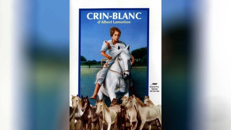 Белая грива Дикая лошадь (1953)   Crin blanc: Le cheval sauvage