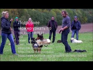 Дрессировка собак, реклама