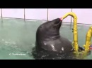 Funny Seal Playing Sax - George Michael's cover song.