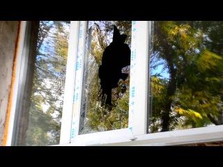 """""""Мое окно – моя крепость""""  В Караганде и области в последнее время участились случаи взлома квартир."""