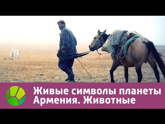 Живые символы планеты Армения Животные Живая Планета