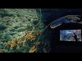 Что находится под дном Тихого океана. Найдена альтернативная цивилизация разум ...