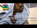 Безлапый котик инвалид Илай в приюте для бездомных животных Дари добро Novosibirsk