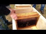 Первые пчелы в Родовом поселении Жива