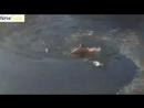 Спасение собаки в Гагаринском парке г Симферополь