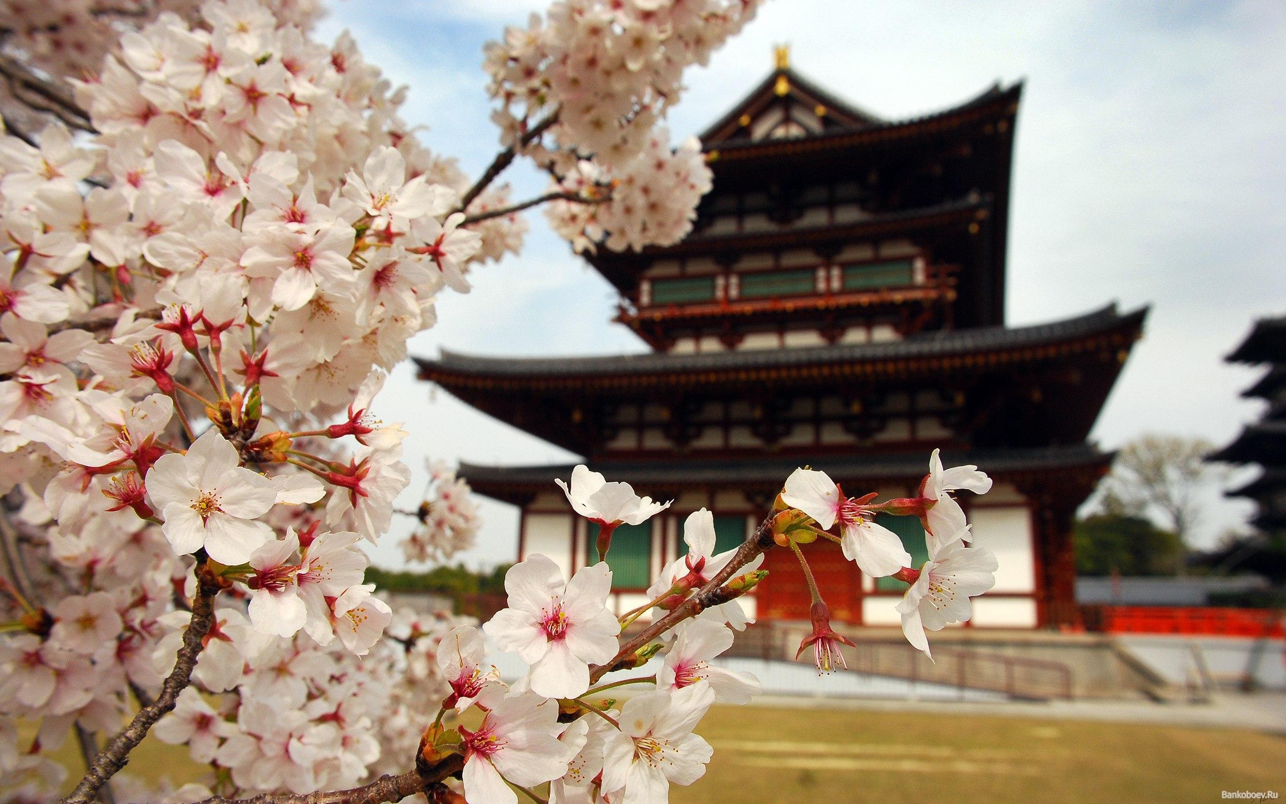 Методы китайской традиционной медицины