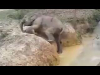 Мама всегда придет на помощь! Слониха помогла маленькому слоненку выбраться из водоема