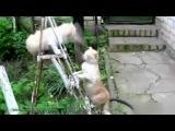 Смішні коти - Funny Cats