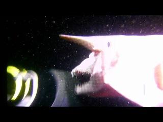 Акула-гоблин. Симпатичная и добрая рыбка, мечта дайвера...