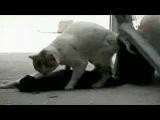 Вот где настоящия Любовь, Кот пытался оживить свою Любовь !!!!