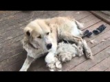 Юсуф и Ясмин #help_big_dog_Юсуф и #help_big_dog_Ясмин