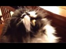 Кот ест мороженное во славу сатане