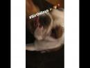 Instagram video by F.I.A • Dec 8, 2016 at 2_29am UTC