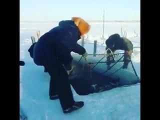Настоящая зимняя рыбалка и охота в Якутии (2017)