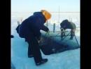 Настоящая зимняя рыбалка и охота в Якутии 2017