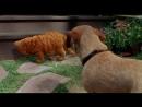 Гарфилд (2004) HD 720p
