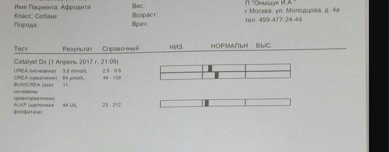 Москва, Афродита, сука 2,5 г - Страница 3 GiBPsMslx1U